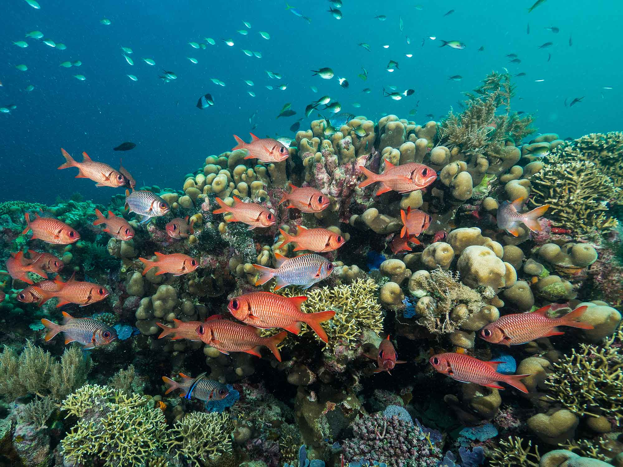 Image of Coral and Fish