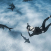 Jillian Freediving With Great Hammerhead Sharks, Camera, Underwater, Diving