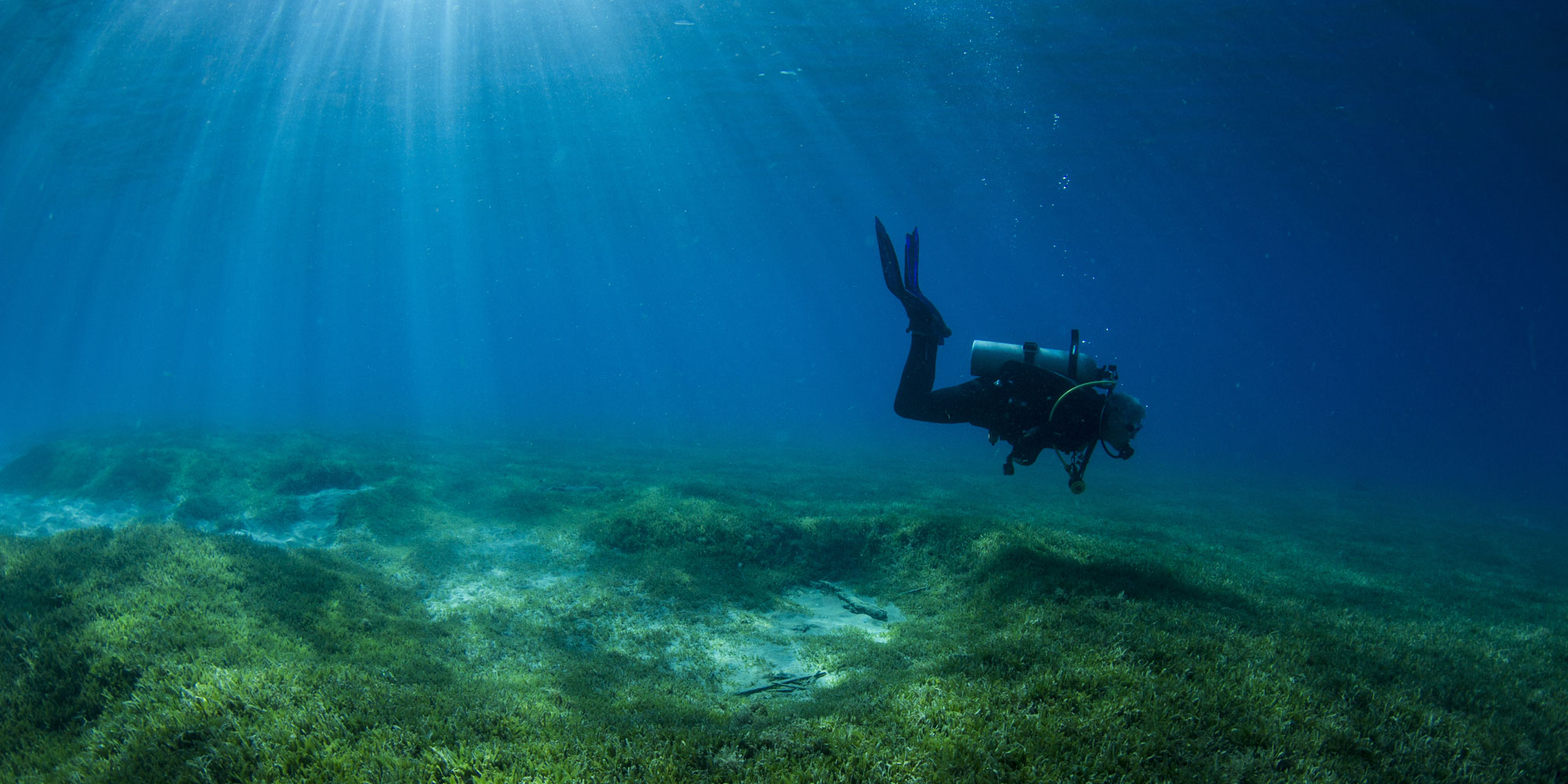 seagrass, scuba diver, diving, sound diving
